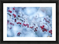 Winter flowers Picture Frame print