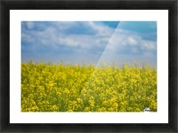 Summer flowers Picture Frame print