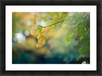 Beautiful autumn background Picture Frame print