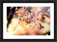 Beautiful Spring cherry flowers Picture Frame print