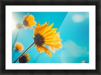 Yellow flowers and blue sky Picture Frame print