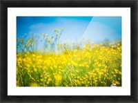Summer flowers, yellow and blue Picture Frame print