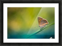Beautiful summer background Picture Frame print