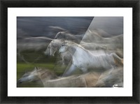 Stampedo Picture Frame print