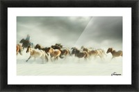 Horses gallop Picture Frame print