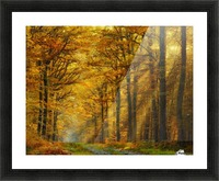 Enchanted Forest Picture Frame print