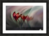 Krokus Picture Frame print