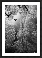 Flight Picture Frame print