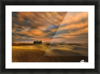 Cypresses... Picture Frame print