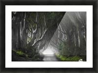 DARK HEDGES Picture Frame print
