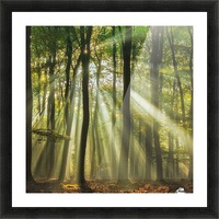 Sunny start to the day ........ Picture Frame print