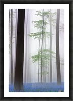 foggy forest .... Picture Frame print