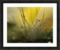 A golden morning shower Picture Frame print