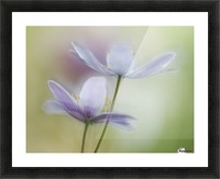 Two of a kind Picture Frame print