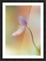 Tender spring Picture Frame print