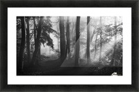 The first light... Picture Frame print