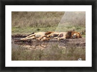 Warriors at rest Picture Frame print