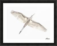Fly Picture Frame print