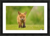 Baby Red Fox Picture Frame print