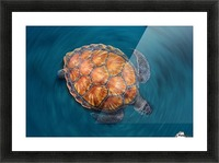 spin turtle Picture Frame print