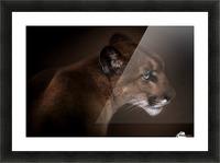 Puma Picture Frame print