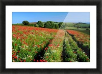 Ablaze of colour Picture Frame print