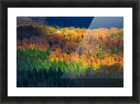 Amongst the trees Picture Frame print
