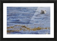 Watching Otter Picture Frame print