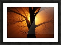 abstract sun tree Picture Frame print