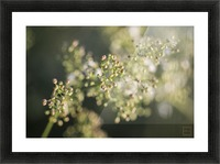 Flower Picture Frame print