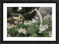 bokeh Picture Frame print