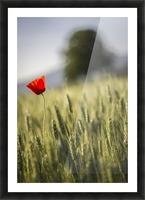 poppy Picture Frame print
