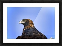 Golden Eagle Picture Frame print