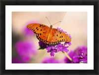 Orange Butterfly Picture Frame print