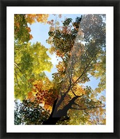 Autumn Trees Low-Angle Picture Frame print