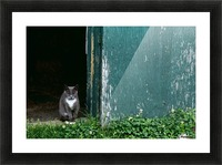 Cat In A Doorway Picture Frame print