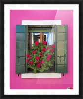 Pink Wall And Green Shutters, Burano, Italy Picture Frame print