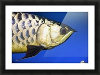Closeup Of A Fish Picture Frame print