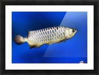 Fish Picture Frame print