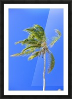 Palm Tree Against Clear Blue Sky Picture Frame print