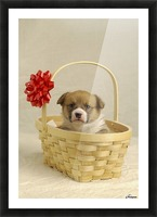 Puppy In A Basket Picture Frame print