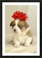 Puppy Wearing A Red Bow Picture Frame print