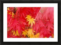 Close-Up Fall Leaves Picture Frame print