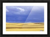 Wheat Fields Near Hermiston, Oregon, Usa Picture Frame print
