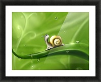 Snail Picture Frame print
