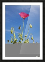 Red Flower Against Blue Sky Picture Frame print