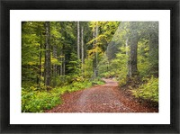 Fall Forest Picture Frame print
