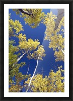 Forest During Autumn, Kananaskis, Alberta, Canada Picture Frame print