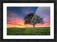 Lonely Tree at Sunset Picture Frame print