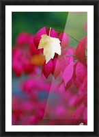Oregon, United States Of America; A Yellow Leaf Fallen On Pink Leaves Picture Frame print